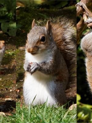 squirrels featured